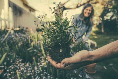 gardeners share plants
